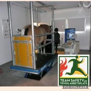 2_hästkliniken_romme_antonio_teamsafety