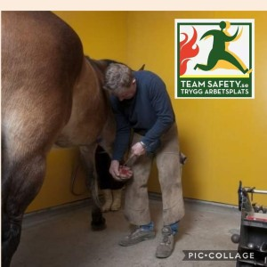 hästkliniken_romme_antonio_teamsafety